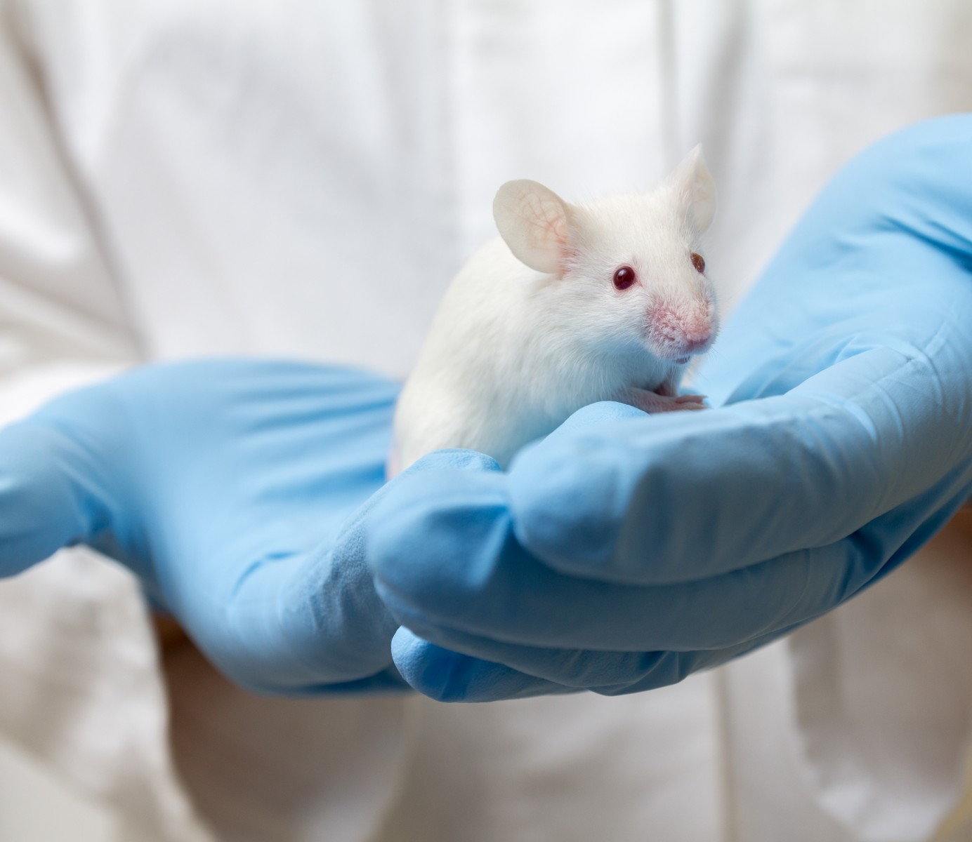 Blocking a Spinal Muscular Atrophy Enzyme, JNK3, Seen to Ease Disease in Mice Regardless of Underlying Mutation