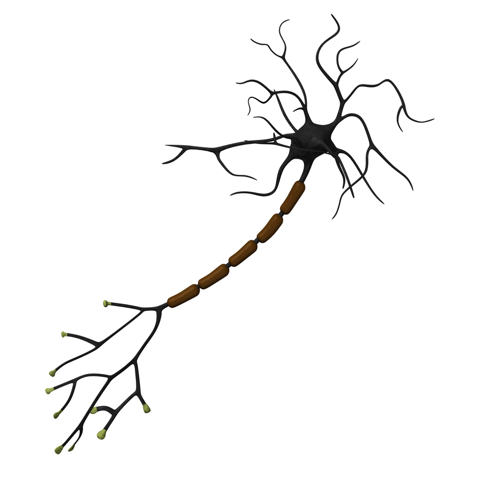 Why Motor Neurons In Sma So Sensitive To Protein S Loss