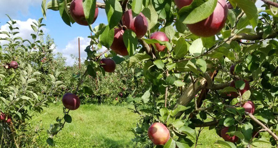 Apple Orchards, ACT, and Trying New Things