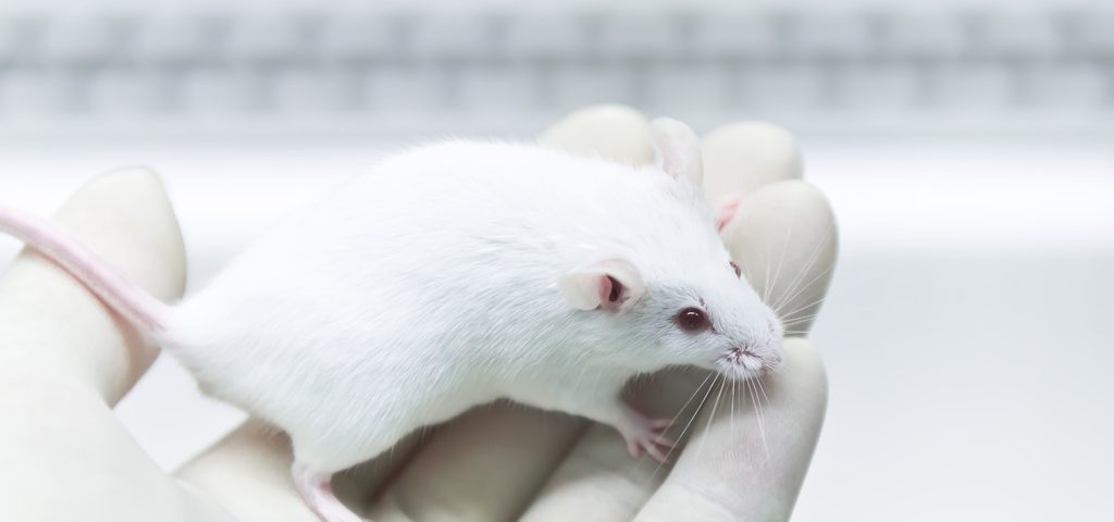 Lowering EphA4 Gene Expression Has Limited Therapeutic Potential in Mouse Model of Severe SMA, Study Says